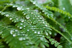 Fresh Rain Stock Images