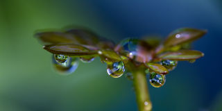 Fresh rain drops. Close up of fresh rain drops on green tropical vegetation in Costa Rica Stock Photo