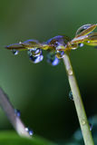 Fresh rain drops. Close up of fresh rain drops on green tropical vegetation in Costa Rica Stock Photography