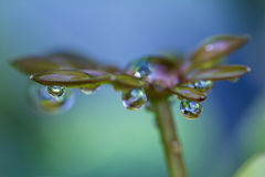 Fresh rain drops. Close up of fresh rain drops on green tropical vegetation in Costa Rica Royalty Free Stock Photo