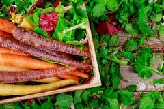 Fresh rainbow carrots the garden fresh green lettuce salad. Fresh different multicolored carrots the garden fresh green lettuce salad healthy organic vegetable stock photos