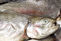 Fresh rainbow trout. Close-up Stock Photography