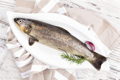 Fresh rainbow trout from above. Fresh rainbow trout fish on white plate, from above. Culinary seafood eating royalty free stock image