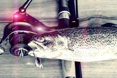 Fresh rainbow trout closeup,Soft lighting effect. Royalty Free Stock Photo