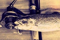 Fresh rainbow trout closeup,Soft lighting effect. Stock Photo