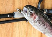 Fresh rainbow trout closeup,Soft lighting effect. Royalty Free Stock Image