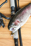 Fresh rainbow trout closeup Royalty Free Stock Photo