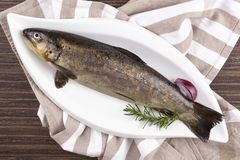 Fresh rainbow trout fish. Fresh rainbow trout fish on white plate, from above. Culinary seafood eating royalty free stock image