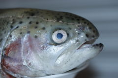 Fresh rainbow trout. Stock Photo