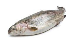 Fresh rainbow trout. One fresh rainbow trout over white background Royalty Free Stock Image