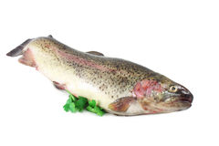 Rainbow trout. Fresh rainbow trout  on white background Royalty Free Stock Image