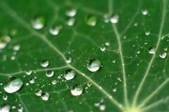 Fresh Raindrops on a Leaf. A photo of fresh dew on a leaf Royalty Free Stock Photography