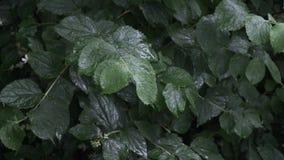 Fresh rainy nature stock footage