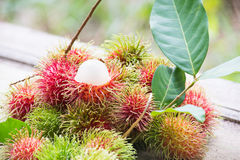 Fresh rambutan in agriculture farm Royalty Free Stock Images