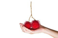 Fresh rambutan fruit isolated on white background. Women's hand holding fresh tropical fruit isolated on white background Stock Photos