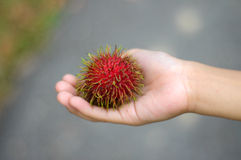 Fresh Rambutan Fruit (Nephelium lappaceum). MALACCA, MALAYSIA – JULY 2014: Fresh asian red rambutan fruit (Nephelium lappaceum) from Malaysia and its ready to Stock Image