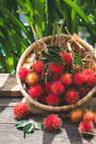 Fresh Rambutan Fruits. From Vietnam Royalty Free Stock Image