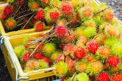 Fresh rambutan from garden for sale in market. Fruit Stock Photography