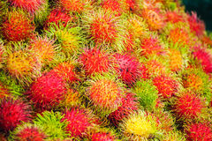 Fresh rambutan from garden for sale in market. Fruit Royalty Free Stock Images