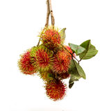 Fresh Rambutan group with branches and leaves, tropical fruit. Royalty Free Stock Photos