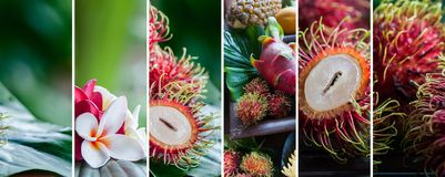 Fresh rambutan in natural conditions on a beautiful tropical bac. Kground. Exotic, tropical fruits. Healthy food concept, bio. Organic food. Collage Stock Photo