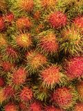 Fresh rambutan. Red green hair fruit Stock Photography