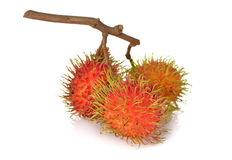 Fresh rambutan with stem on white. Background Royalty Free Stock Photo