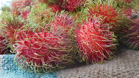 Fresh Rambutan. A fruit covered with rough leathery skin and hair-like spines , belies its sweet juicy flesh within.  It is native to tropical Southeast Asia Stock Images