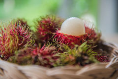 Fresh rambutan sweet delicious in the basket . tropical fruit.  Stock Images