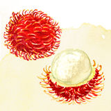 Fresh rambutan. Royalty Free Stock Images