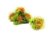 Fresh rambutan on white background. Fresh rambutan on isolated white background Royalty Free Stock Images