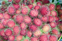 Fresh rambutans. A pile of fresh rambutans from the garden prepared for selling to the tourist in Jantaburi province,Thailand.it is the native fruit of Stock Images