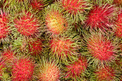 Fresh rambutans for sell to the market in thailand Royalty Free Stock Images