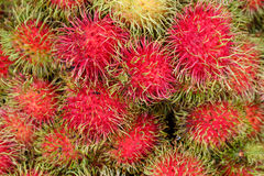 Fresh rambutans for sell to the market in thailand Royalty Free Stock Photo