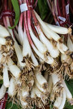 Fresh ramps or wild leeks. Fresh organic ramps or wild leeks for sale at the local farmers market Stock Photography