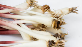 Fresh ramps or wild leeks. Organic ramps or wild leeks on a white background Royalty Free Stock Image