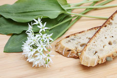 Fresh ramson. With bread on a wooden cutting board Stock Image