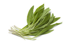 Fresh Ramson leaves. On white background Stock Photography