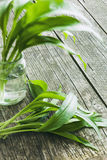 Fresh ramsons leaves. Wild garlic leaves. Healthy vegetable Stock Photography