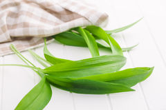 Fresh ramsons leaves. Wild garlic leaves. Healthy vegetable Royalty Free Stock Image