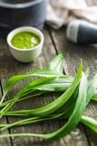 Fresh ramsons leaves. Wild garlic leaves. Healthy vegetable Stock Images