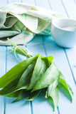 Fresh ramsons leaves. Wild garlic leaves. Healthy vegetable Royalty Free Stock Photo