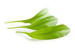 Fresh ramsons leaves. Wild garlic leaves isolated on white background Stock Photography