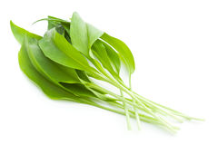 Fresh ramsons leaves. Wild garlic leaves isolated on white background Stock Photos