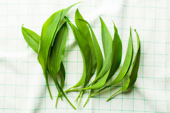 Fresh ramsons leaves. Wild garlic leaves on kitchen napkin. Healthy vegetable Stock Photography