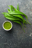 Fresh ramsons leaves. Wild garlic leaves and tasty pesto. Healthy vegetable Stock Photos