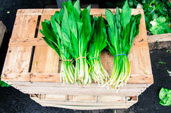 Fresh Ramsons at the market. Fresh ramson bunches at the market royalty free stock photo