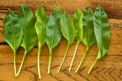 Fresh ramsons on a wooden plate Stock Photos