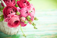 Fresh ranunculus. Bouquet of pink ranunculus in a basket Royalty Free Stock Photo