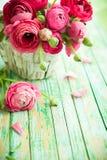 Fresh ranunculus. Bouquet of pink ranunculus in a basket Stock Photos